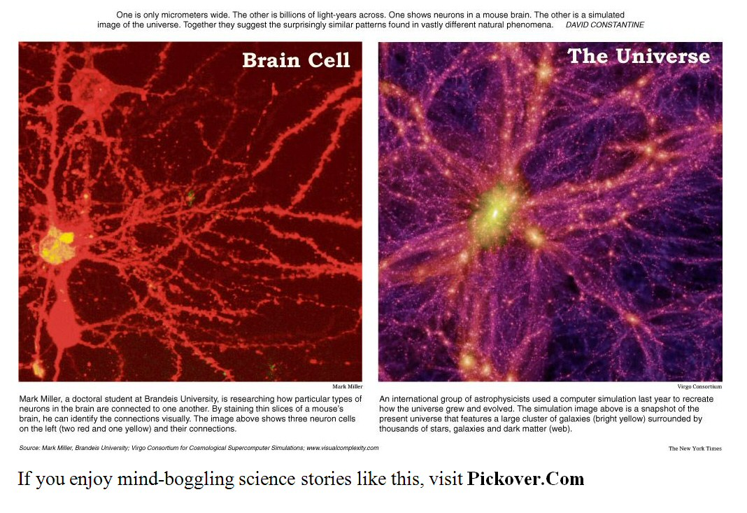 brain cell and the universe